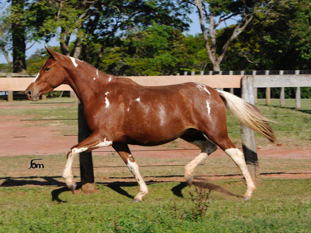 SUÍÇA R.M. (TE)