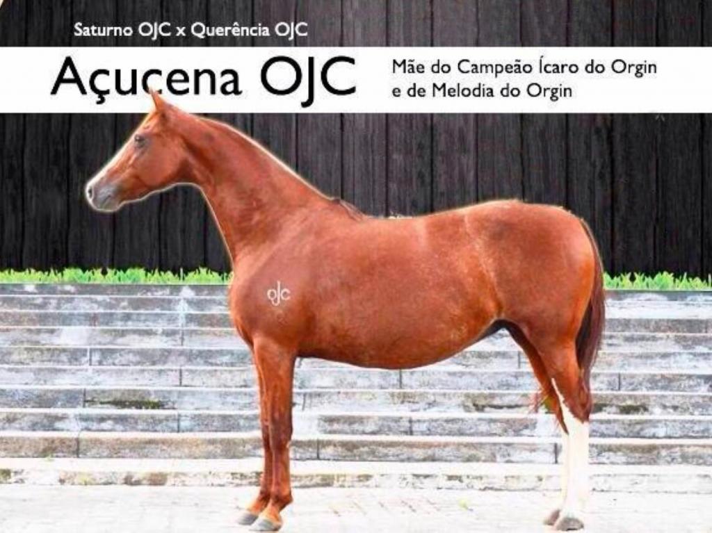 MELODIA DO ORGIN (TE)